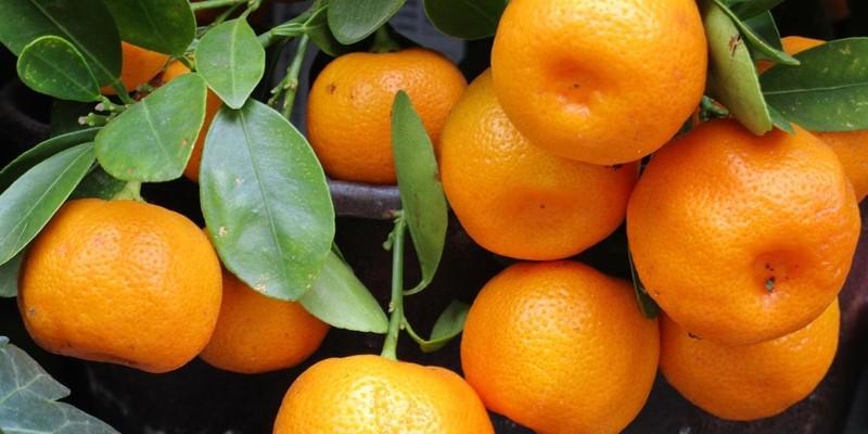 fornecedores/2019/06/tangerina.jpg