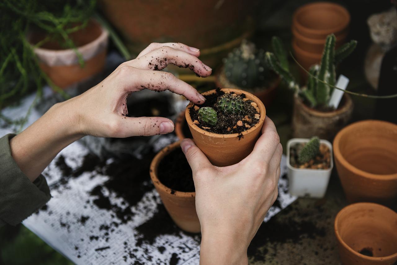 Dicas de manutenção de plantas no jardim