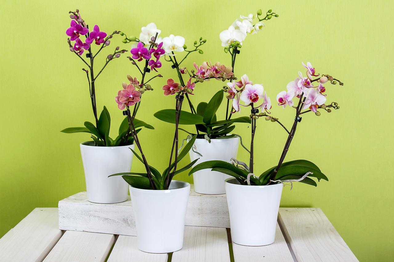 Manutenção das Plantas em Vasos