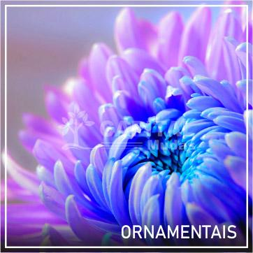 Ornamentais